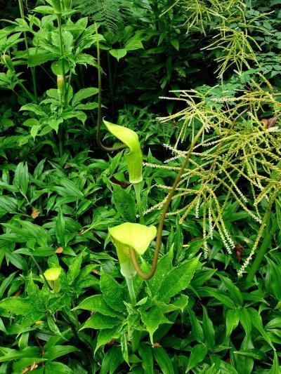 Seasonal plant allure from